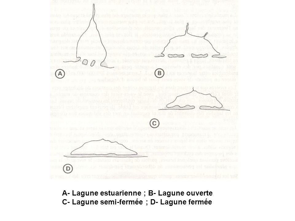 A- Lagune estuarienne ; B- Lagune ouverte C- Lagune semi-fermée ; D- Lagune fermée