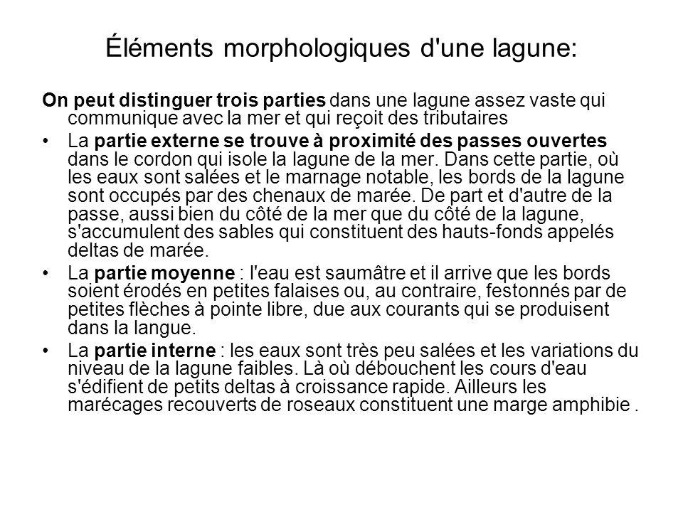 Éléments morphologiques d une lagune: