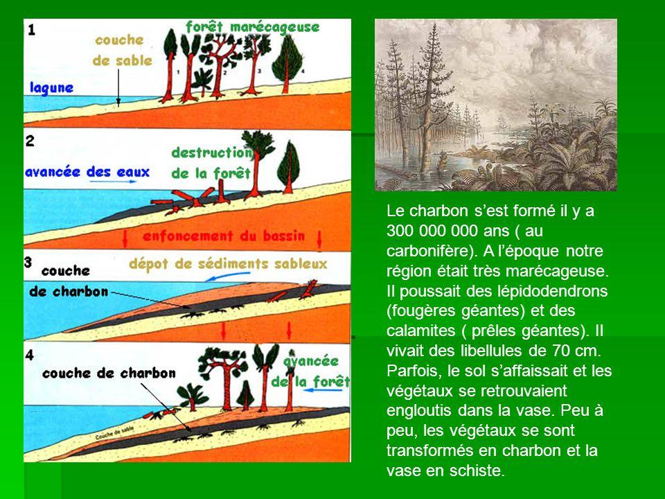 Le charbon s'est formé il y a 300 000 000 ans ( au carbonifère)