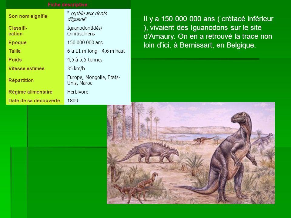 Fiche descriptive: Son nom signifie. reptile aux dents d iguane Classifi- cation. Iguanodontidés/ Ornitischiens.