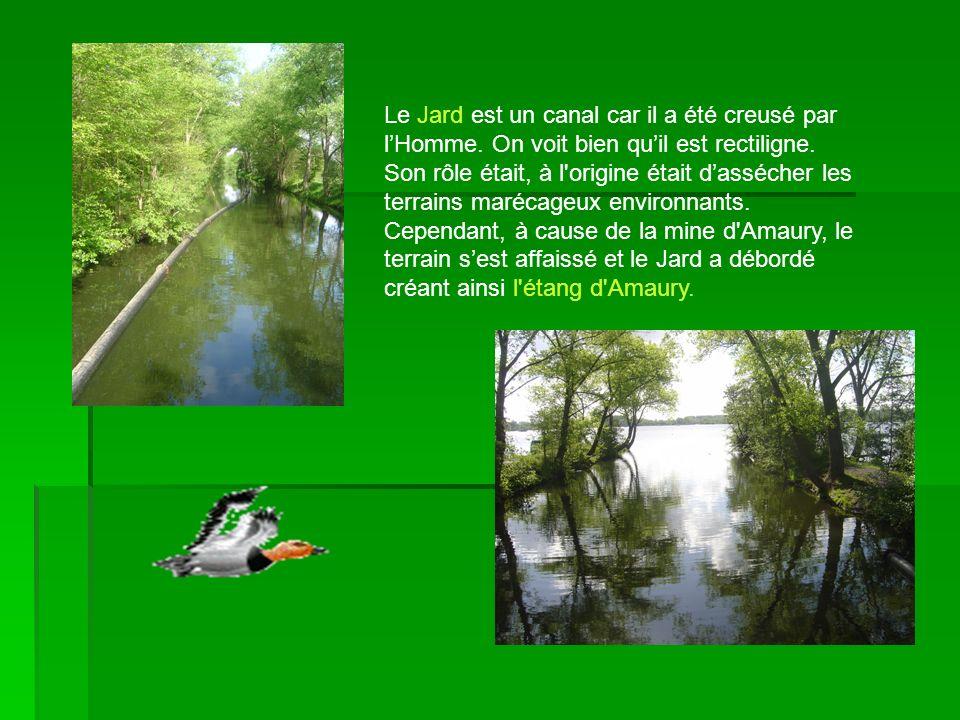 Le Jard est un canal car il a été creusé par l'Homme