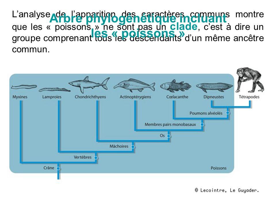 Arbre phylogénétique incluant les « poissons »