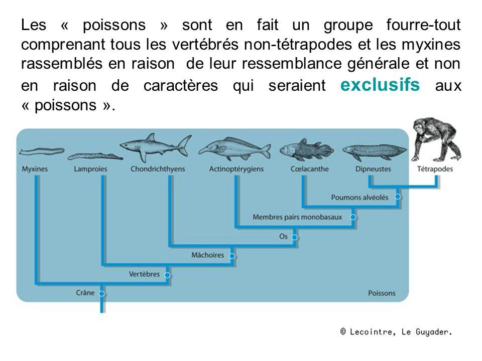 Les « poissons » sont en fait un groupe fourre-tout comprenant tous les vertébrés non-tétrapodes et les myxines rassemblés en raison de leur ressemblance générale et non en raison de caractères qui seraient exclusifs aux « poissons ».