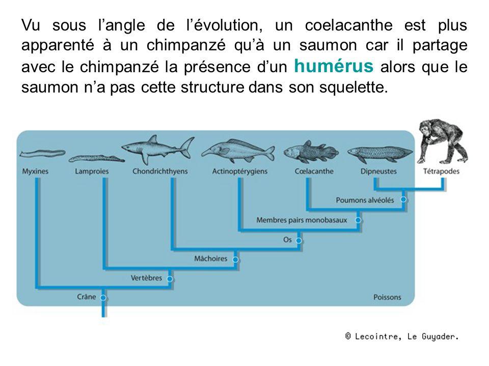 Vu sous l'angle de l'évolution, un coelacanthe est plus apparenté à un chimpanzé qu'à un saumon car il partage avec le chimpanzé la présence d'un humérus alors que le saumon n'a pas cette structure dans son squelette.