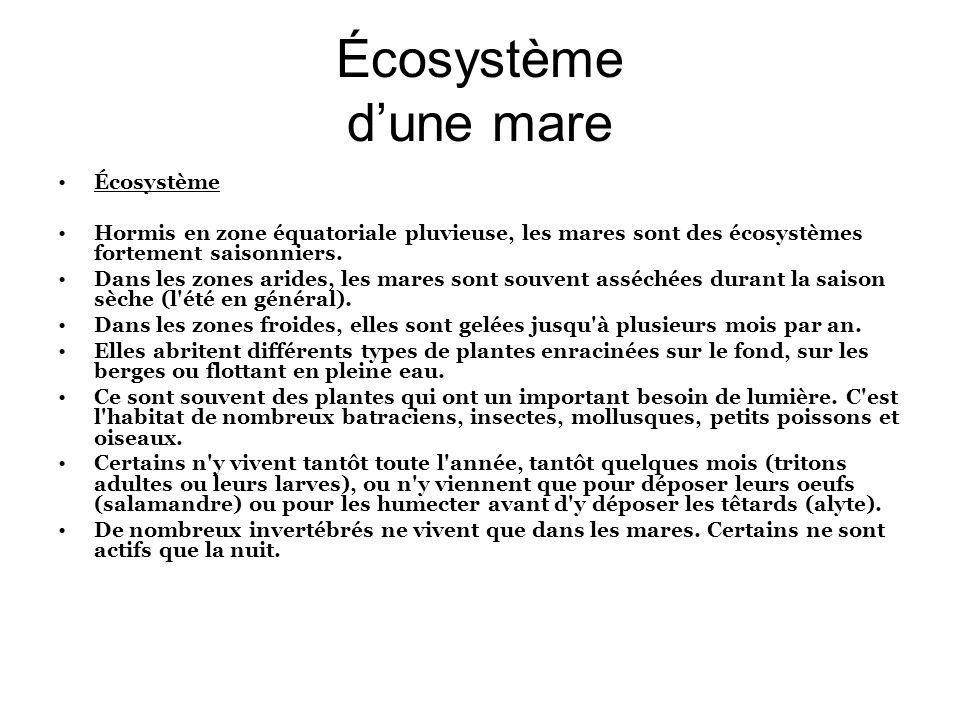 Écosystème d'une mare Écosystème