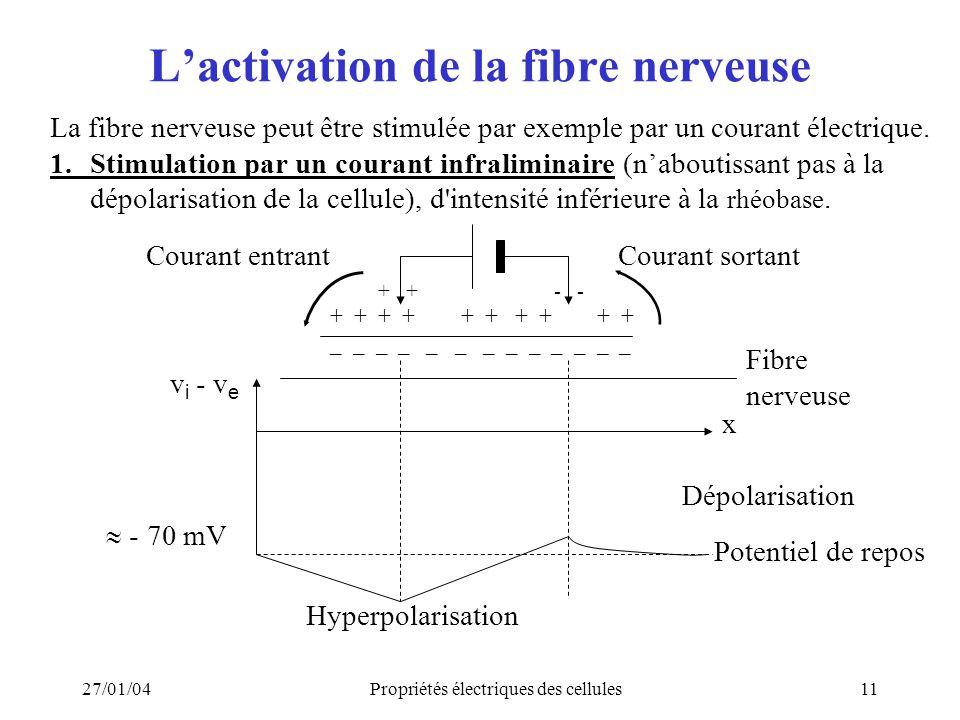 L'activation de la fibre nerveuse