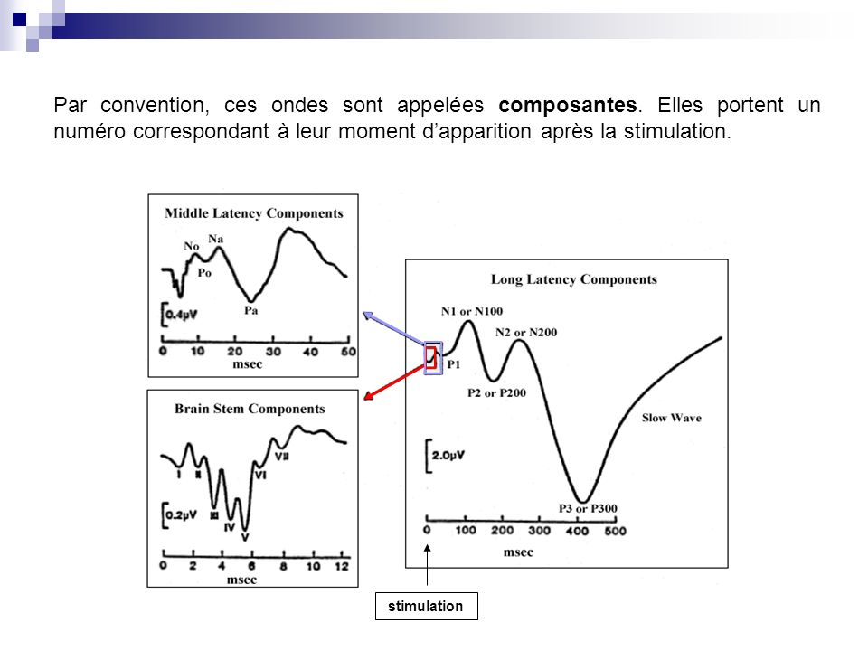 Par convention, ces ondes sont appelées composantes