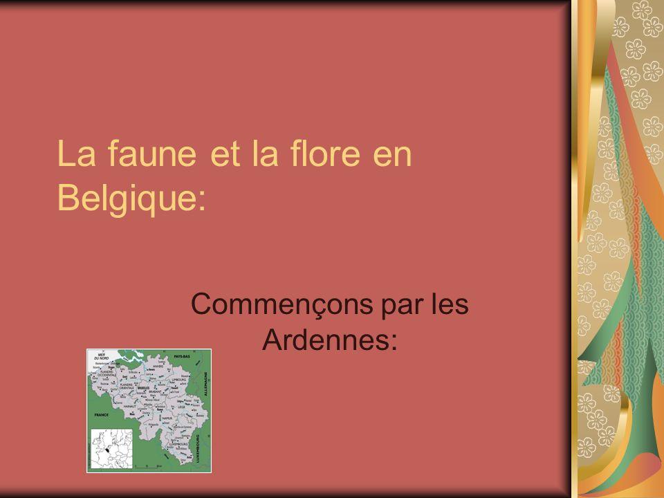 La faune et la flore en Belgique: