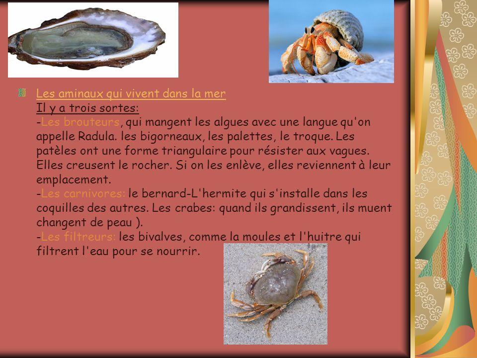 Les aminaux qui vivent dans la mer Il y a trois sortes: -Les brouteurs, qui mangent les algues avec une langue qu on appelle Radula.