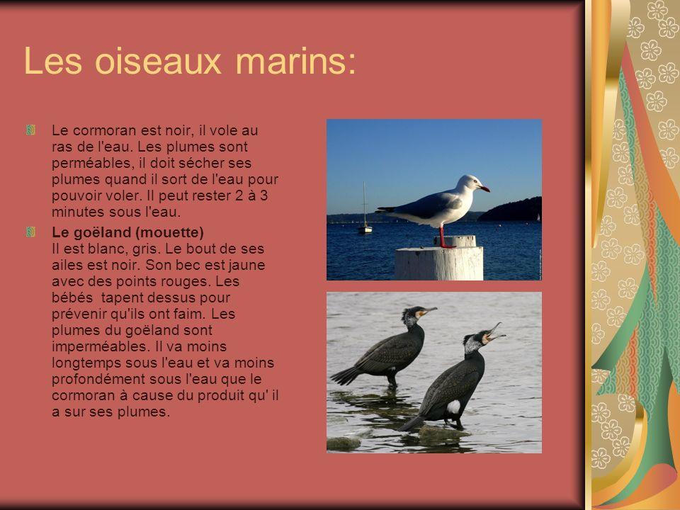 Les oiseaux marins: