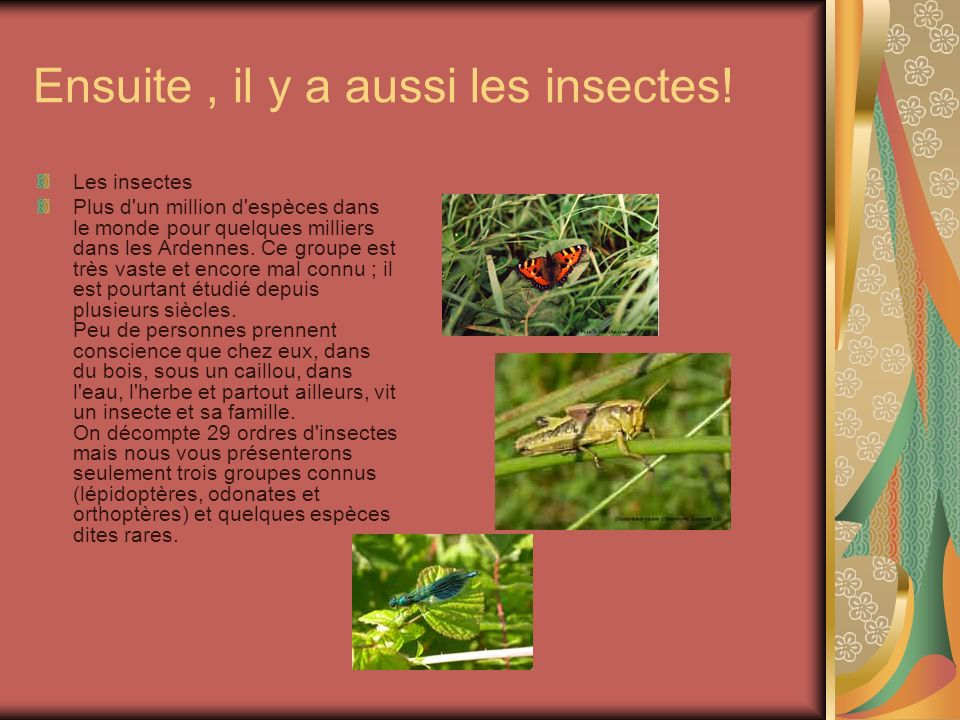 Ensuite , il y a aussi les insectes!