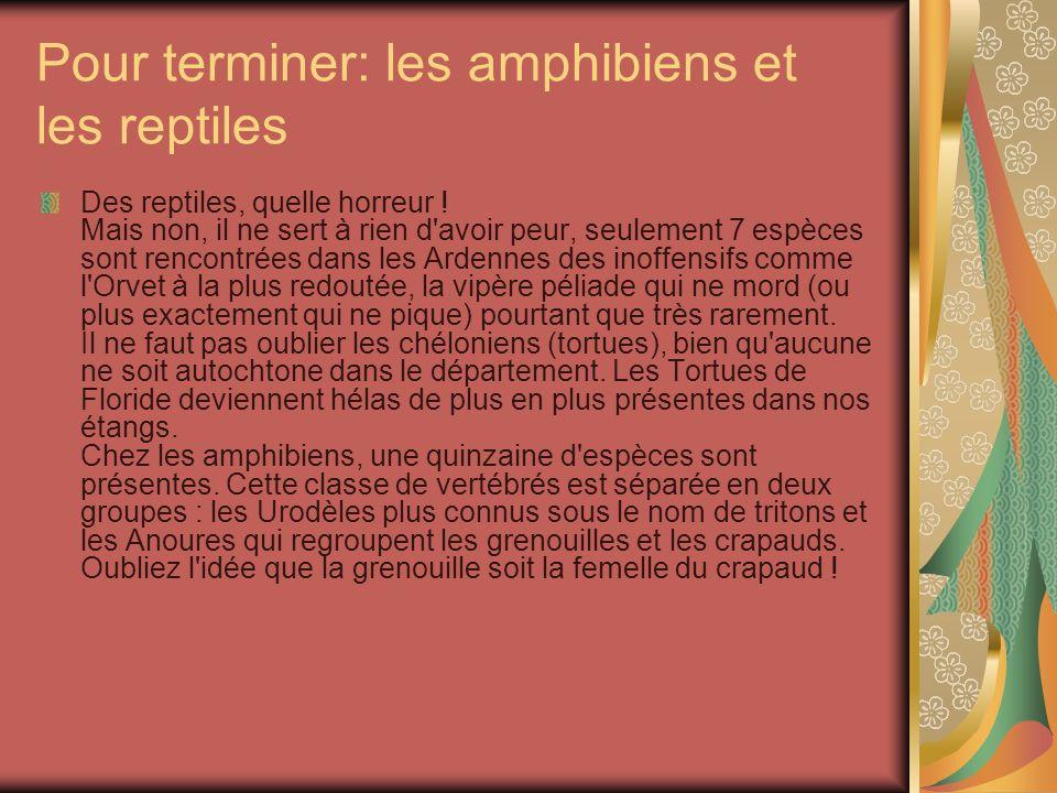 Pour terminer: les amphibiens et les reptiles