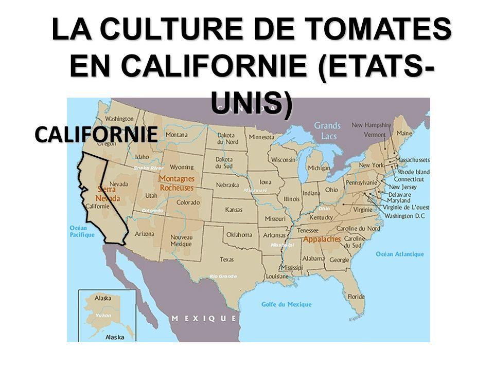 LA CULTURE DE TOMATES EN CALIFORNIE (ETATS-UNIS)