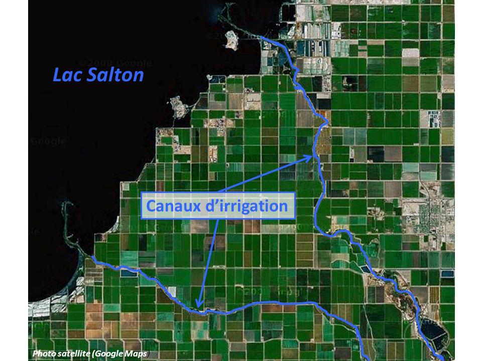 Lac Salton Canaux d'irrigation Photo satellite (Google Maps)