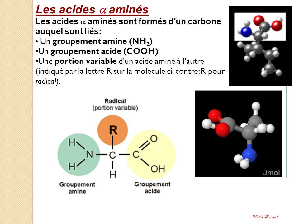 Les acides  aminés Les acides  aminés sont formés d un carbone auquel sont liés: Un groupement amine (NH2)