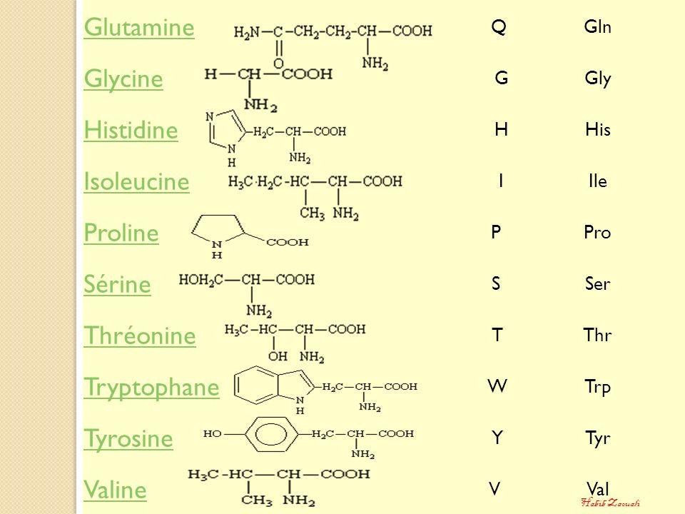 Glutamine Glycine Histidine Isoleucine Proline Sérine Thréonine