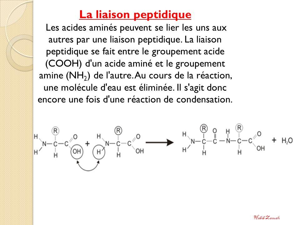 La liaison peptidique