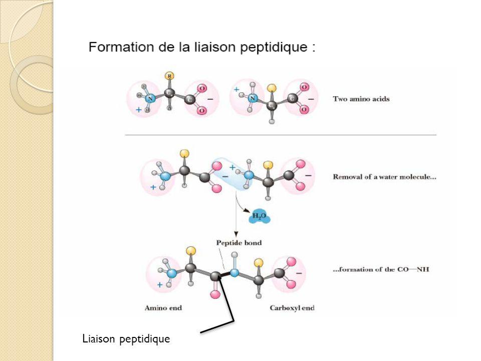 Valine Glycine Liaison peptidique