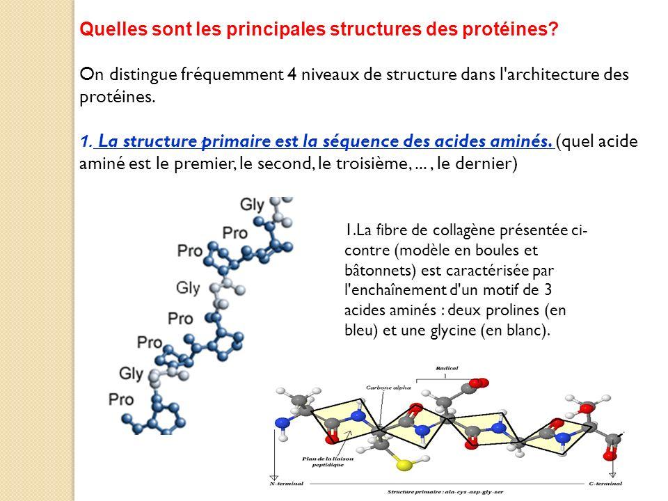Quelles sont les principales structures des protéines