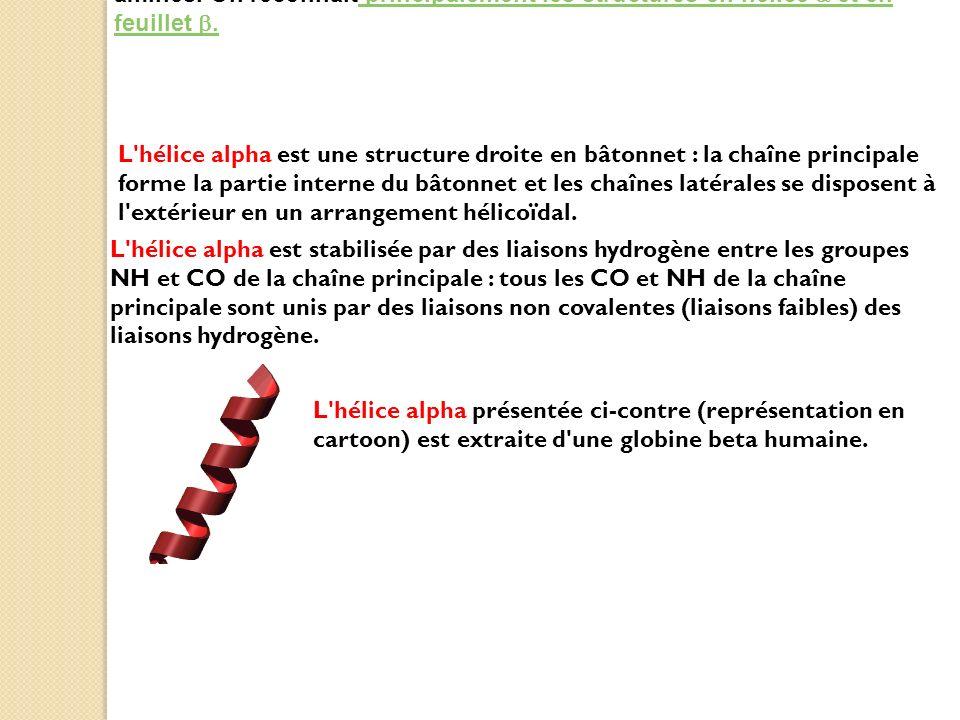 2. Les structures secondaires sont les motifs que forment les acides aminés. On reconnait principalement les structures en hélice a et en feuillet b.