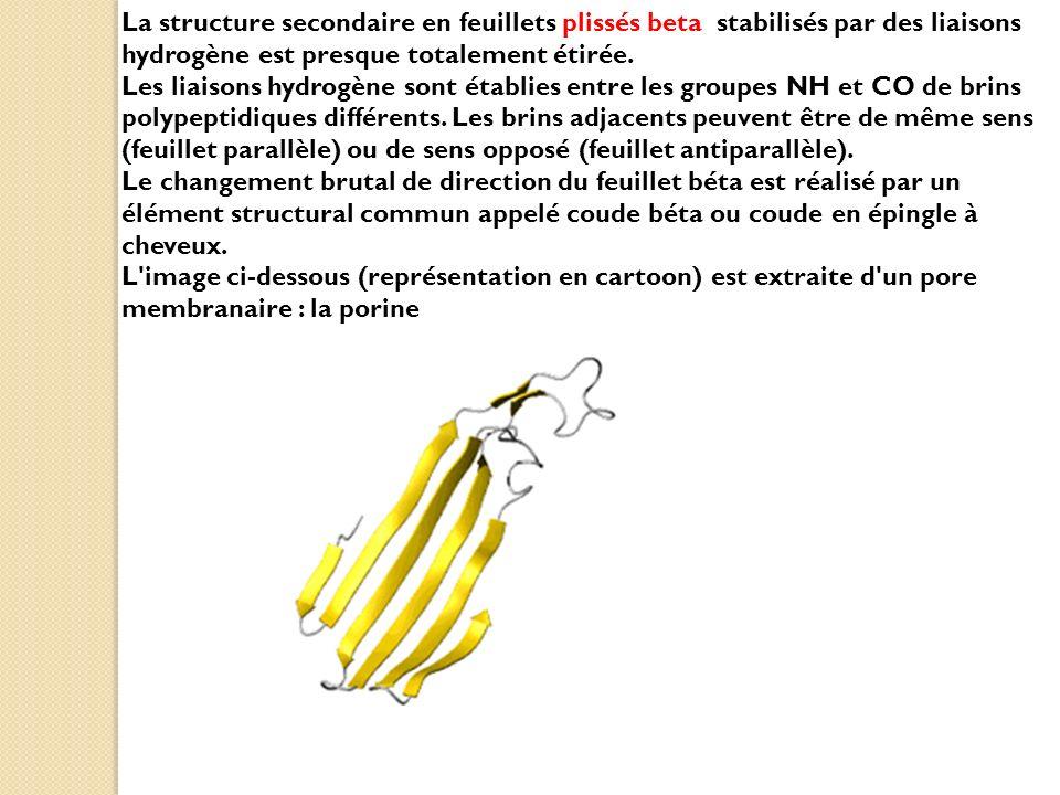 La structure secondaire en feuillets plissés beta stabilisés par des liaisons hydrogène est presque totalement étirée. Les liaisons hydrogène sont établies entre les groupes NH et CO de brins polypeptidiques différents. Les brins adjacents peuvent être de même sens (feuillet parallèle) ou de sens opposé (feuillet antiparallèle).