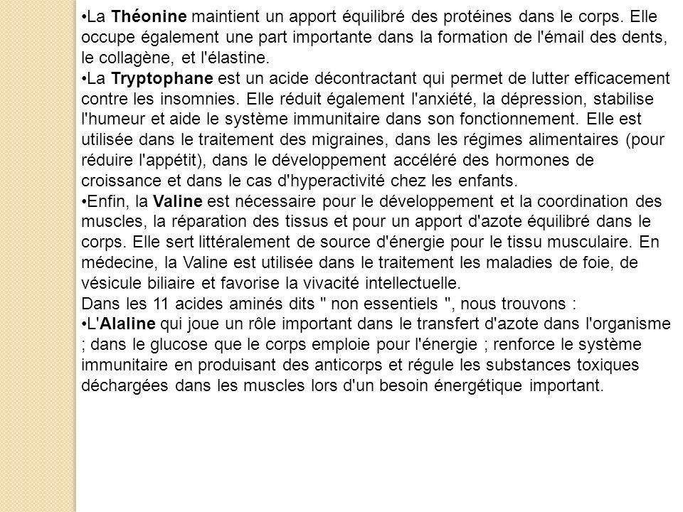La Théonine maintient un apport équilibré des protéines dans le corps