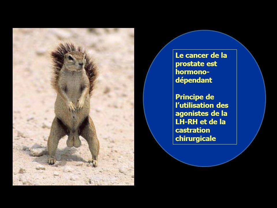 Le cancer de la prostate est hormono-dépendant