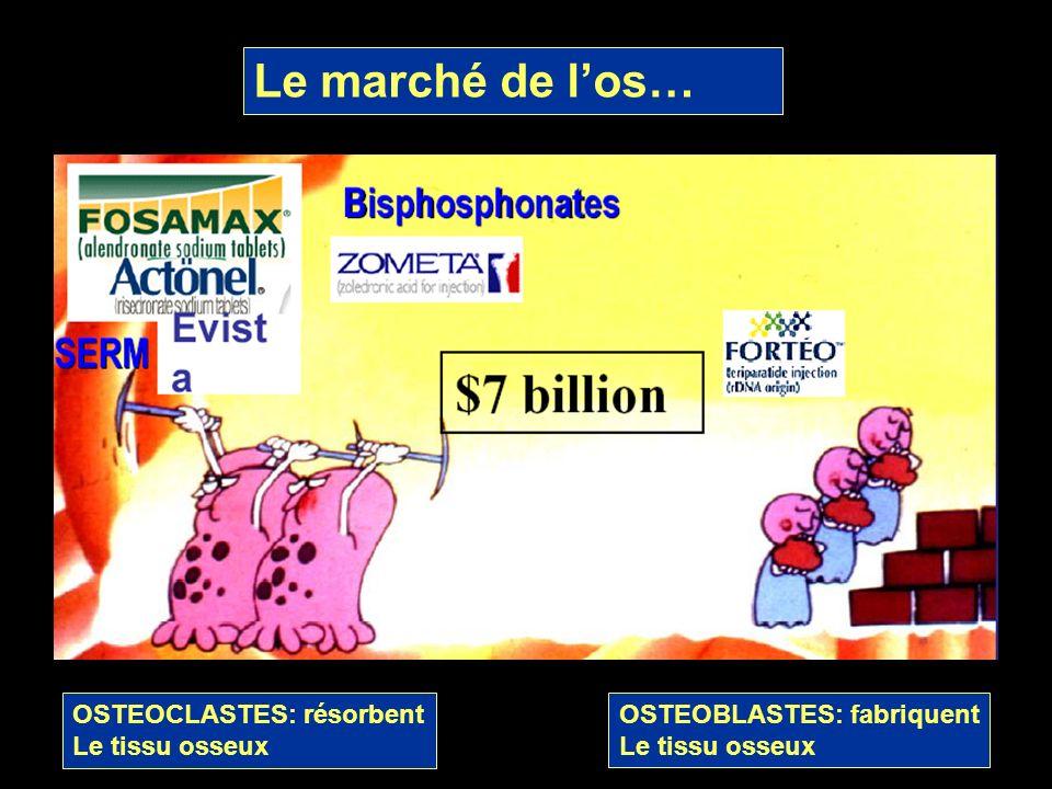 Le marché de l'os… OSTEOCLASTES: résorbent Le tissu osseux