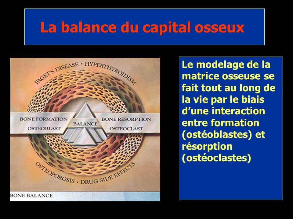 La balance du capital osseux