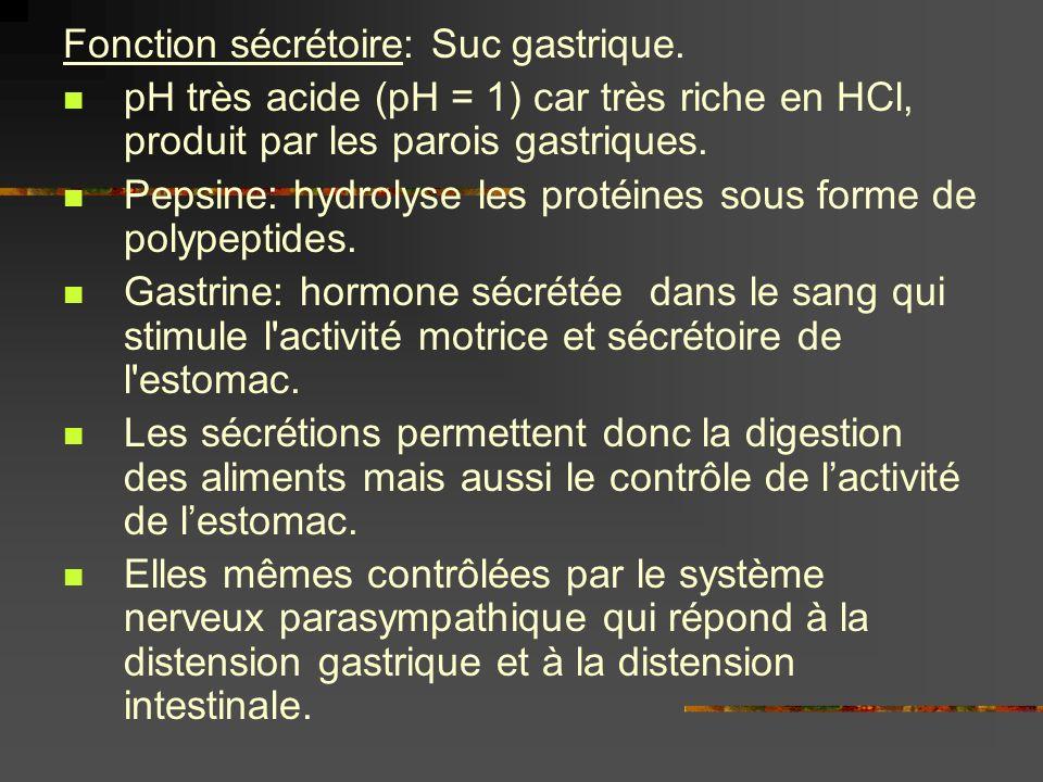 Fonction sécrétoire: Suc gastrique.