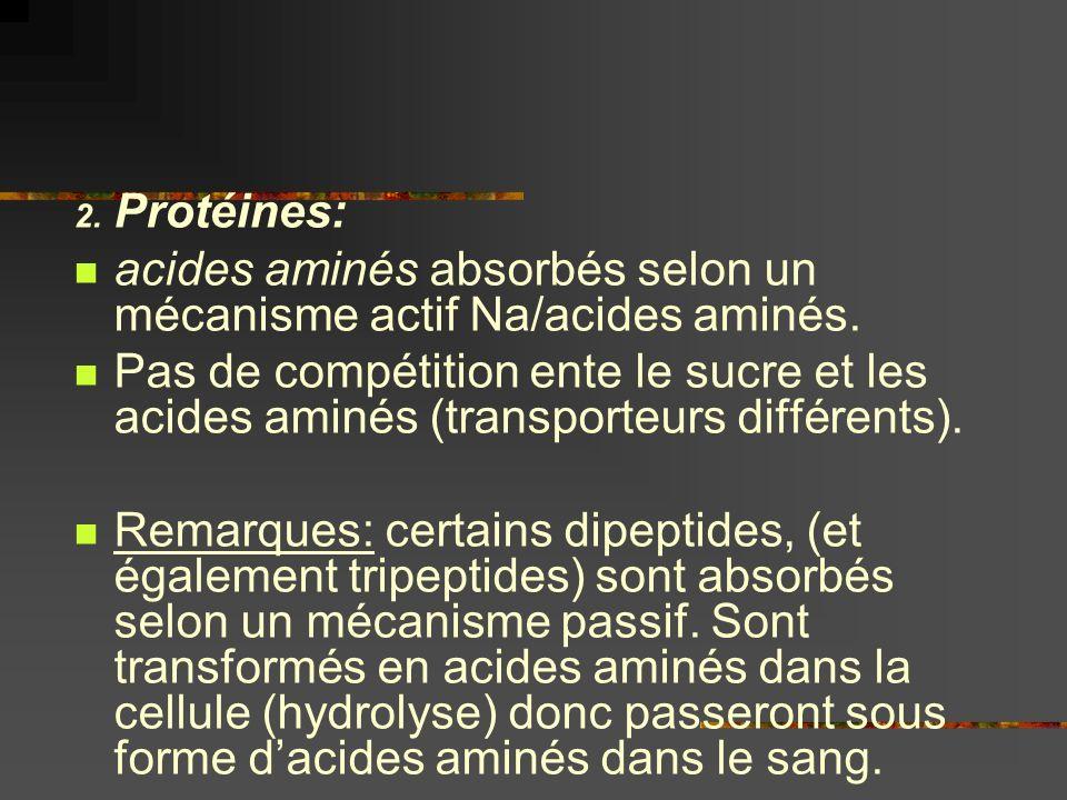 Protéines: acides aminés absorbés selon un mécanisme actif Na/acides aminés.