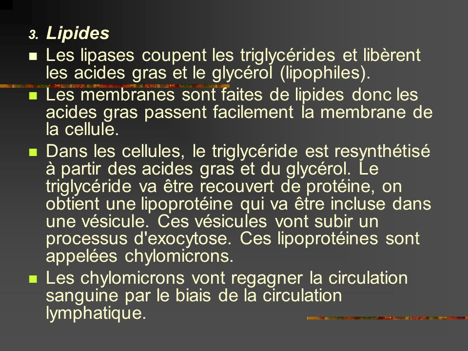 Lipides Les lipases coupent les triglycérides et libèrent les acides gras et le glycérol (lipophiles).