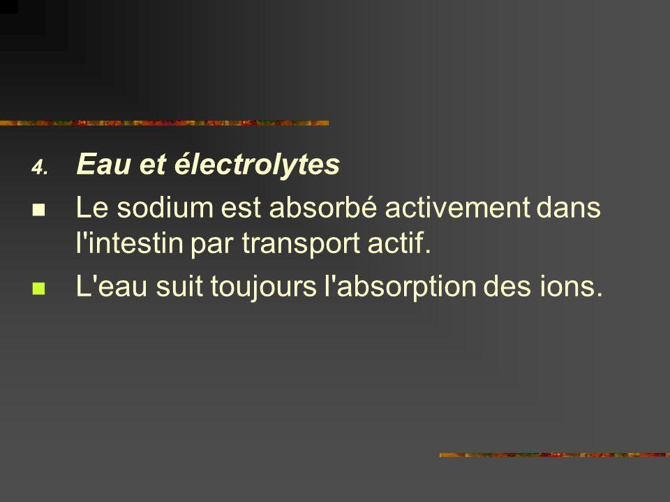 Eau et électrolytes Le sodium est absorbé activement dans l intestin par transport actif.