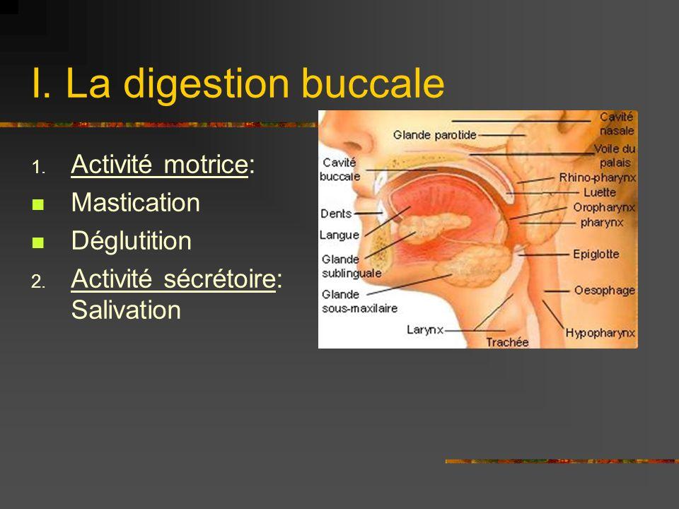 I. La digestion buccale Activité motrice: Mastication Déglutition