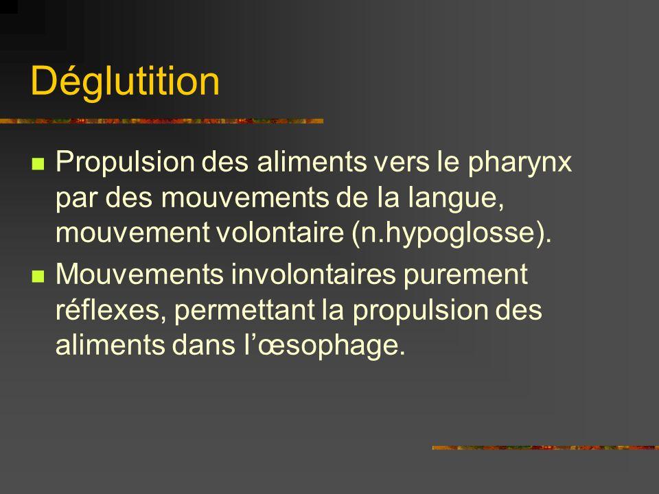 Déglutition Propulsion des aliments vers le pharynx par des mouvements de la langue, mouvement volontaire (n.hypoglosse).