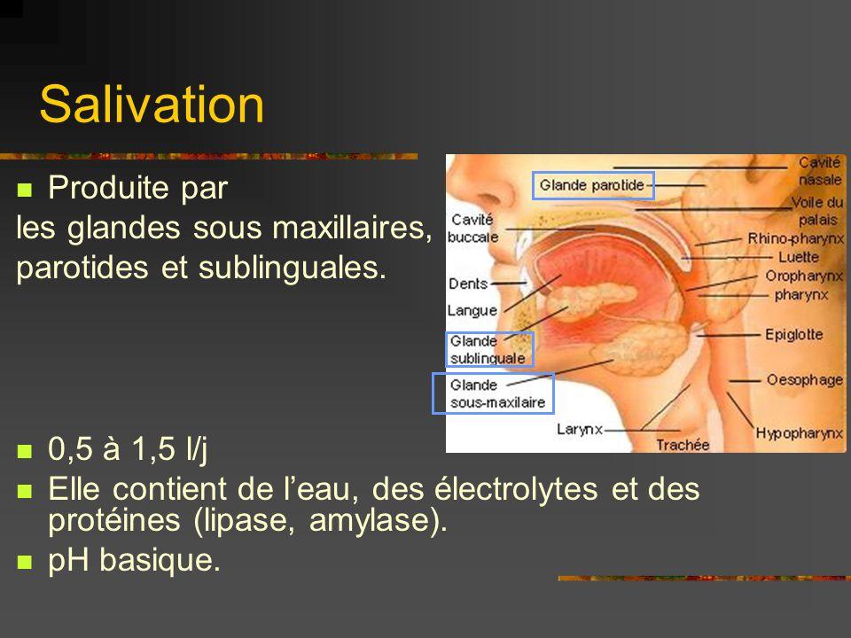 Salivation Produite par les glandes sous maxillaires,