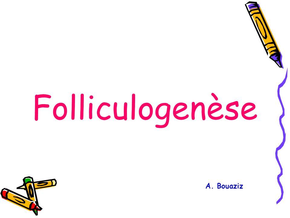 Folliculogenèse A. Bouaziz