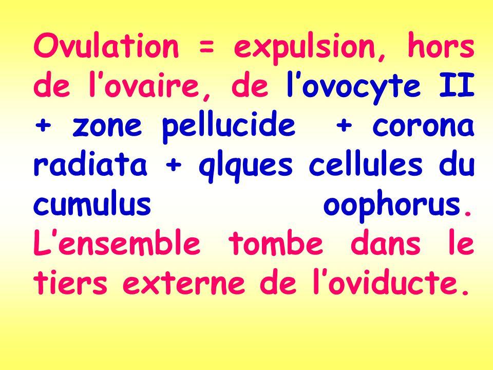 Ovulation = expulsion, hors de l'ovaire, de l'ovocyte II + zone pellucide + corona radiata + qlques cellules du cumulus oophorus.