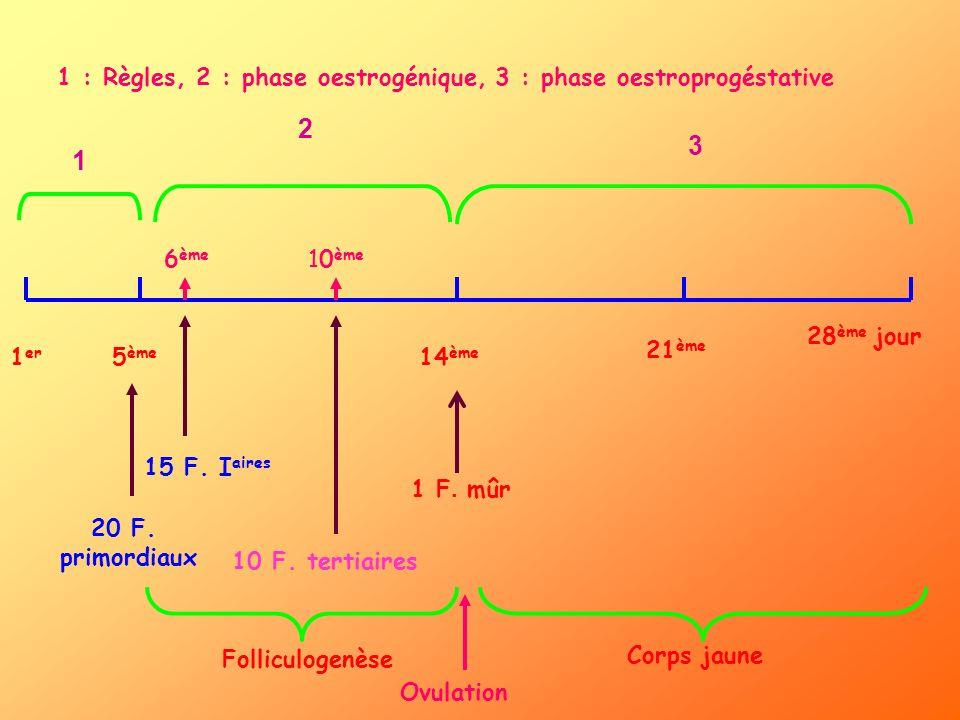 1 : Règles, 2 : phase oestrogénique, 3 : phase oestroprogéstative