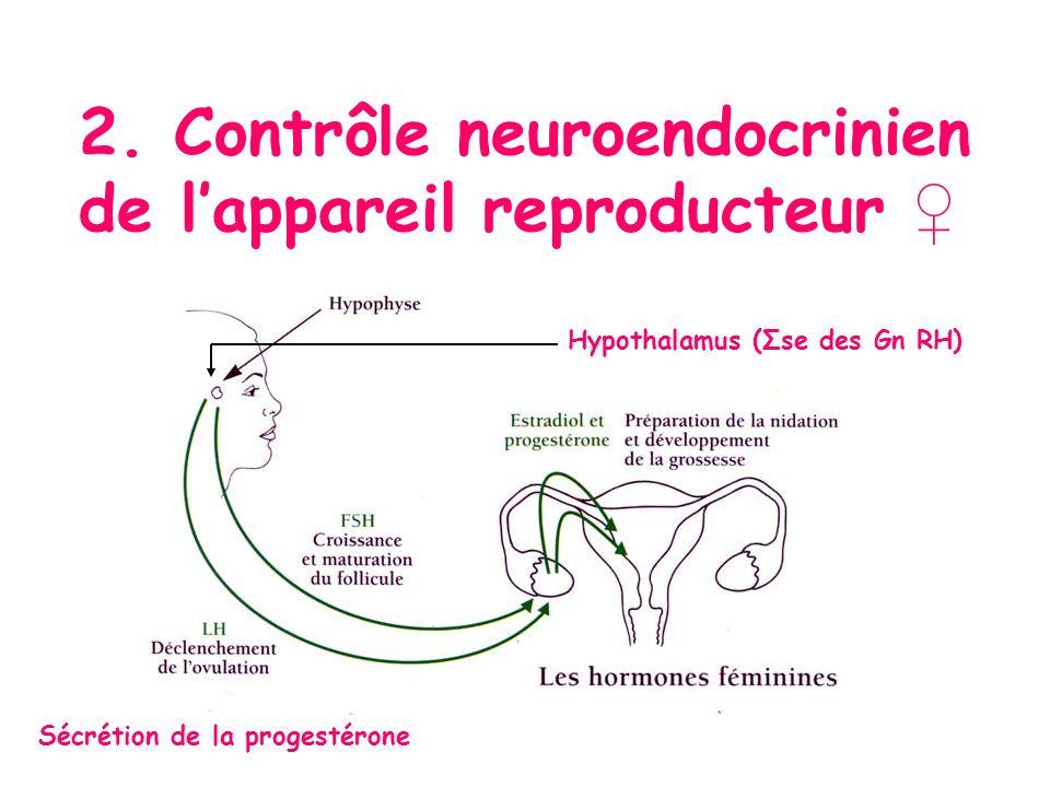 Hypothalamus (Σse des Gn RH) Sécrétion de la progestérone