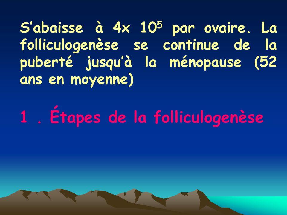 1 . Étapes de la folliculogenèse