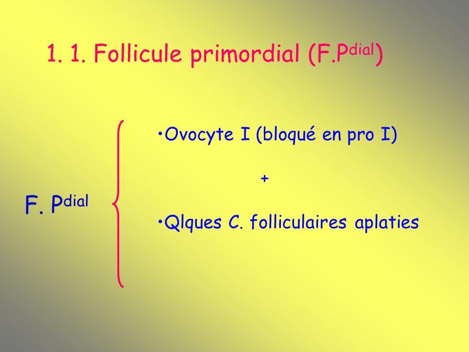 1. 1. Follicule primordial (F.Pdial)