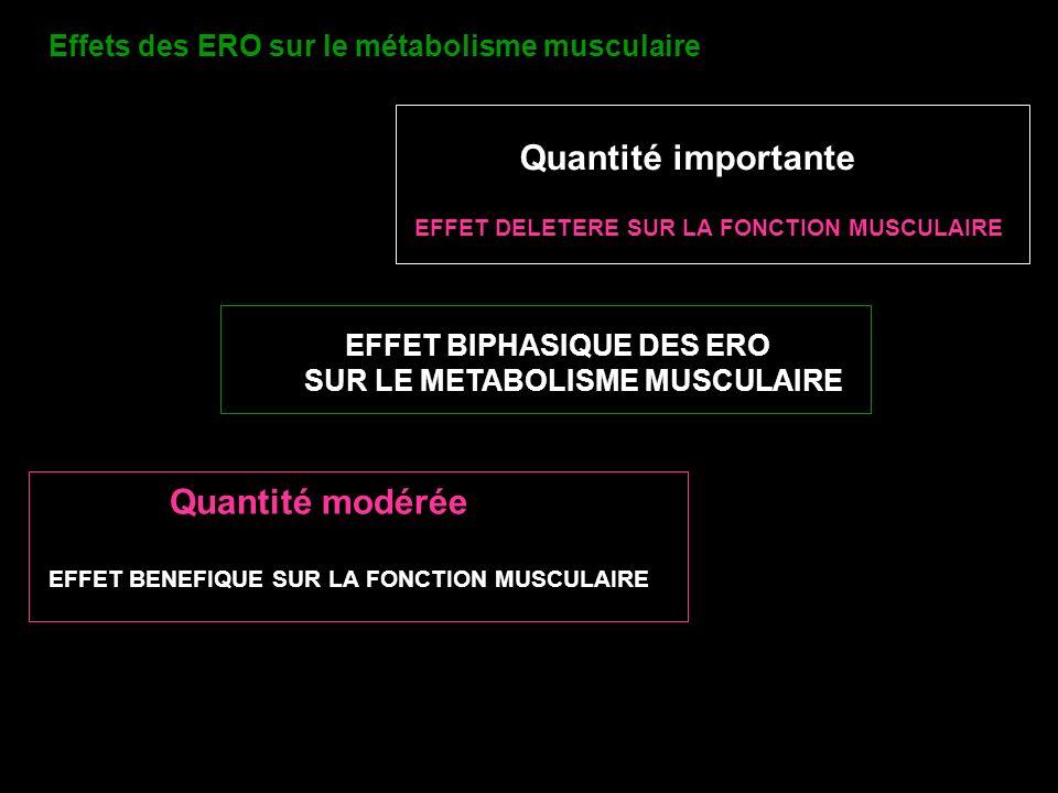 Effets des ERO sur le métabolisme musculaire