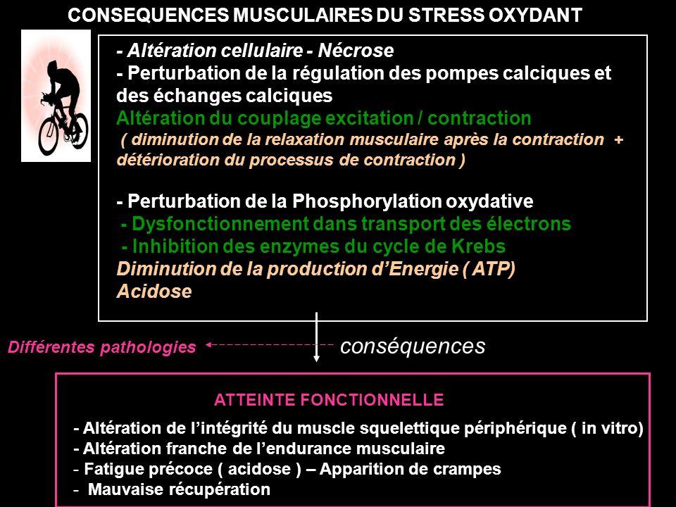 conséquences CONSEQUENCES MUSCULAIRES DU STRESS OXYDANT