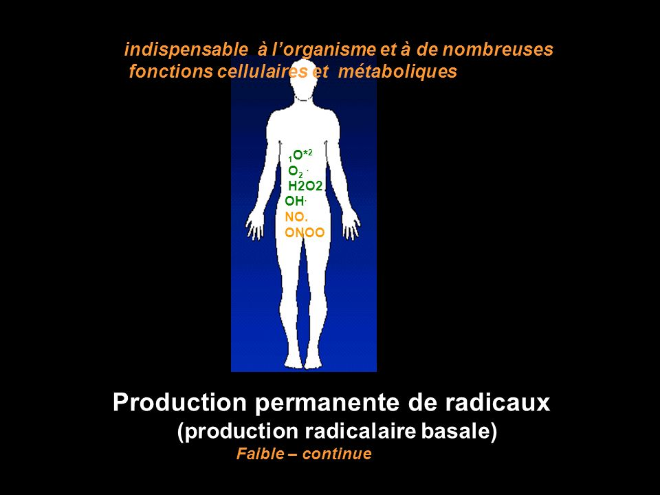 (production radicalaire basale)