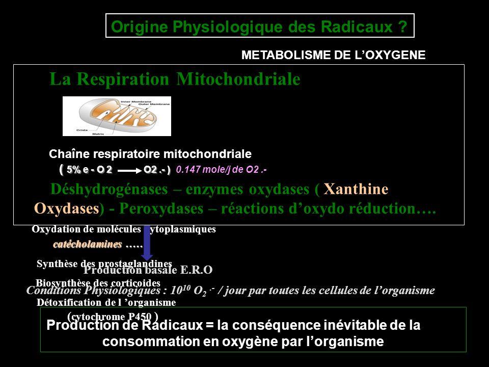 La Respiration Mitochondriale