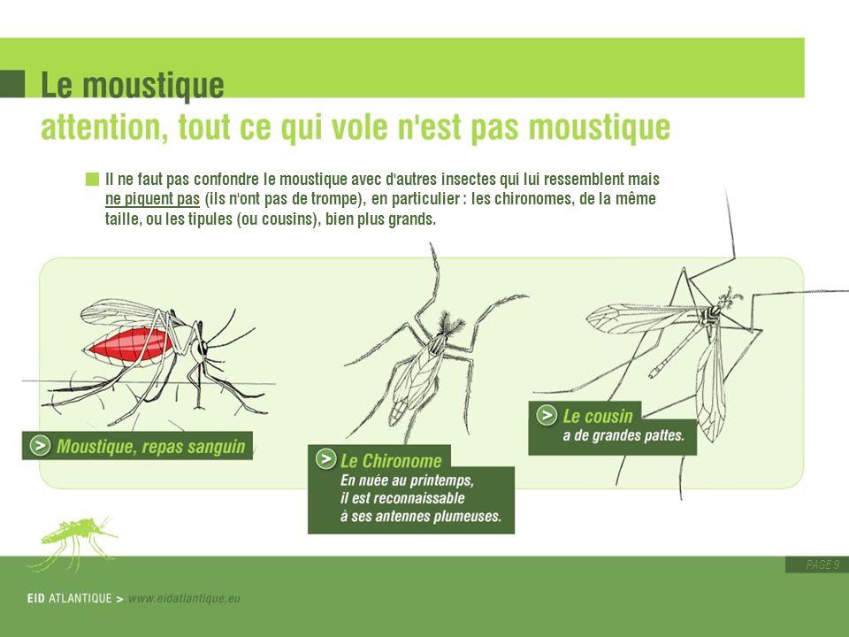 Il ne faut pas confondre le moustique avec d autres insectes qui lui ressemblent mais ne piquent pas (ils n ont pas de trompe), en particulier : les chironomes, de la même taille, ou les tipules (ou cousins), bien plus grands.