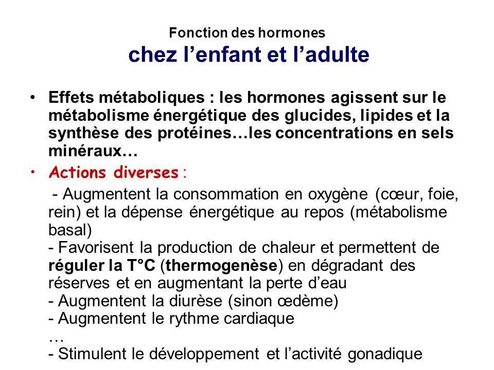 Fonction des hormones chez l'enfant et l'adulte