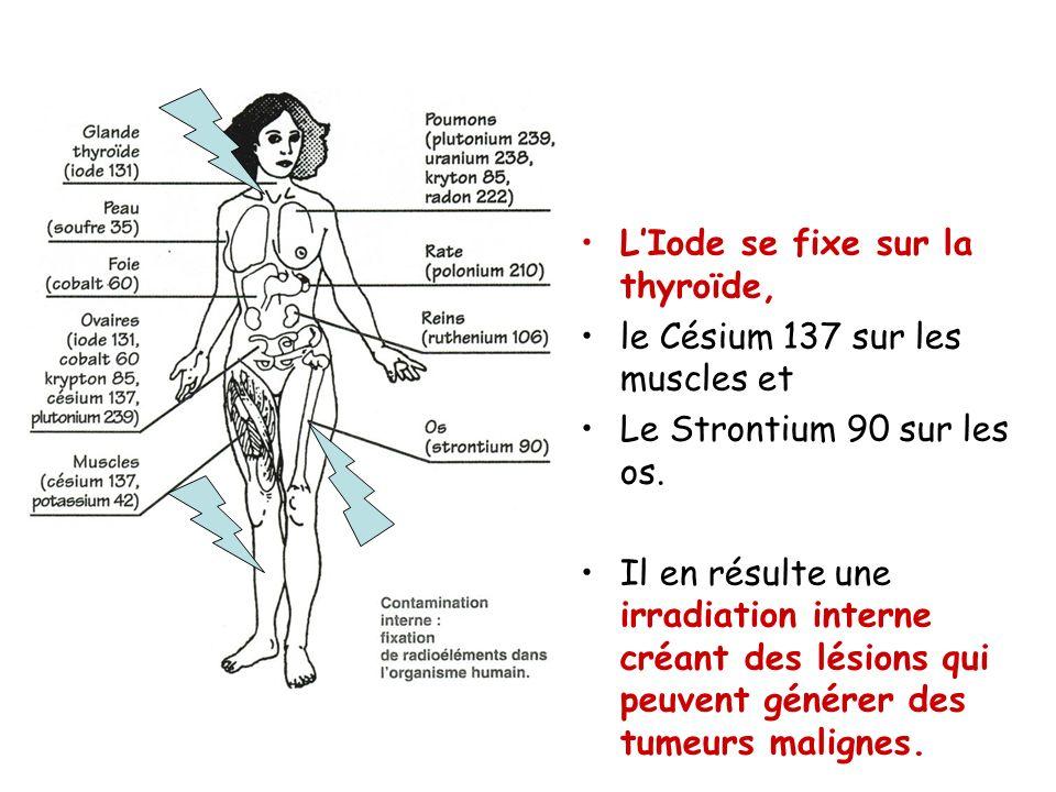 L'Iode se fixe sur la thyroïde,