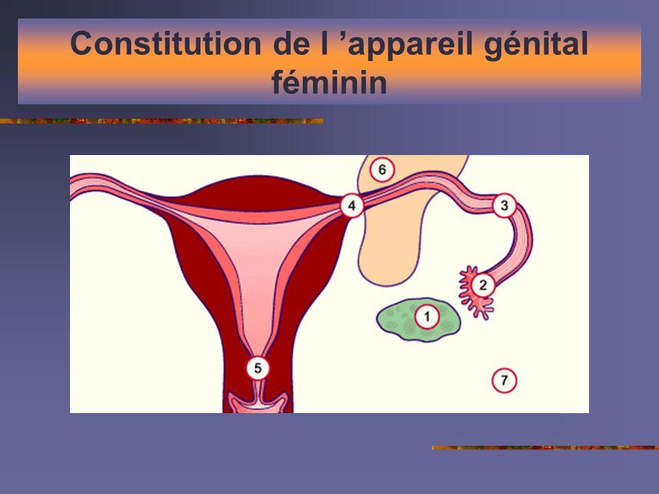 Constitution de l 'appareil génital féminin